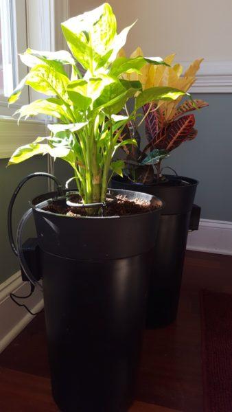 automatic diy self watering pot waters on soil moisture